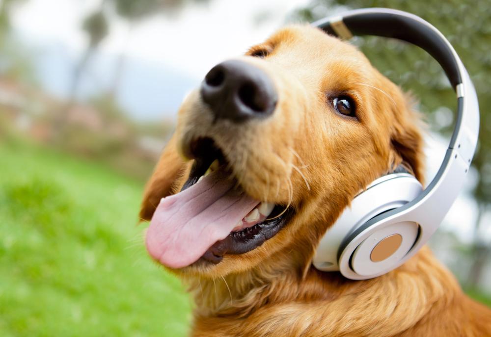 音楽を楽しむ犬